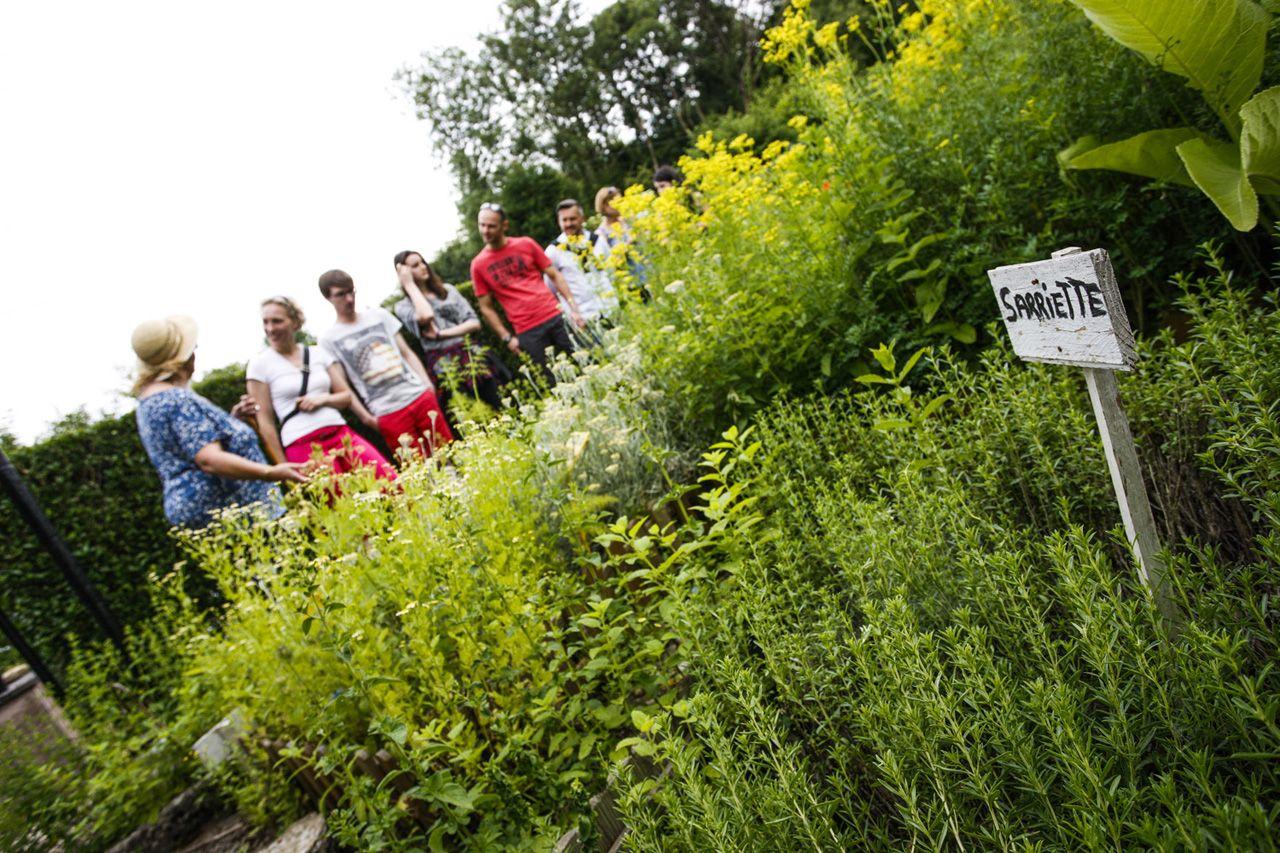 Jardin de plantes aromatiques et medicinales lorraine for Plantes aromatiques