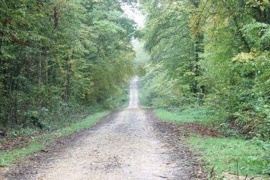 Chemin du Bois-le-prêtre - A Stevan - ADT 54